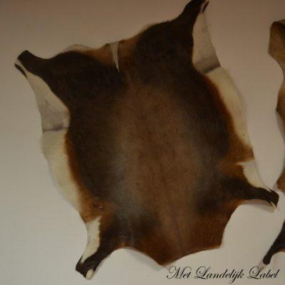 Afrikaanse springbok huid